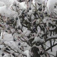 Проказы матушки-зимы :: Марина Домосилецкая