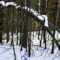 Снежный шарфик :: Евгений Небензя