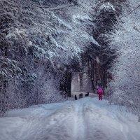 Девочка и собаки в лесу :: Марк Э