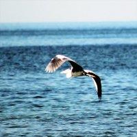 птица над морем :: maikl falkon