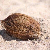 кокос :: maikl falkon