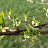 Опять весна.. :: Tatjana