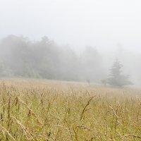 Немного тумана :: Alena Nuke