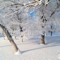 Яркое зимнее утро :: Андрей Заломленков