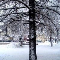 Вот такая зима :: Елена Семигина