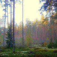 Утро в осеннем лесу :: Leonid Tabakov