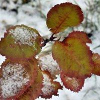 Снежок :: Алена Засовина