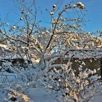 Зимний сад :: Натали Пам