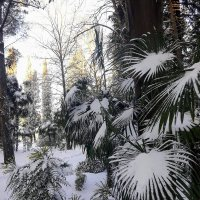 31 января в Сочи :: Tata Wolf
