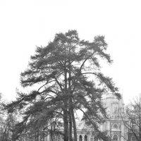 весна в городе :: Светлана Ларионова