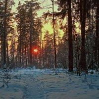 Закат в лесу :: Олег Резенов