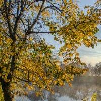 Осень :: Лариса Березуцкая