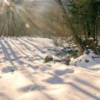 Зимняя тайга :: Жанетта Буланкина