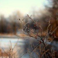 Река :: Алексей С.