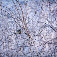 Зимняя сказка за окном :: Ольга Фролова