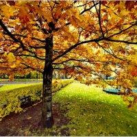 Осенние краски :: Олег Осипов