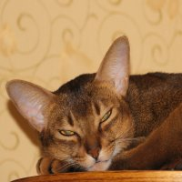 Не надейтесь..не сплю я, не сплю..... :: Tatiana Markova