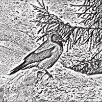 птица :: Юлия Денискина