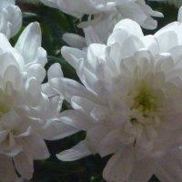 Белый, белый, белый цвет... :: Татьяна Юрасова