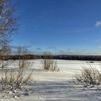 Поля под снежным покрывалом. :: Анатолий. Chesnavik.