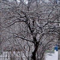 Всё ближе к весне :: Нина Корешкова