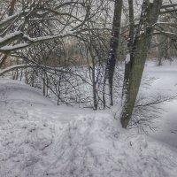 Деревья зимой :: Ирина Крохмаль