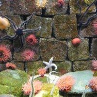 Подводный цветник! :: Виталий Селиванов