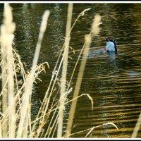 Там тонет в озере, собой любуясь, осень. :: юрий