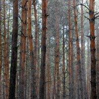 Весенний дождь в лесу. :: Валентина ツ ღ✿ღ