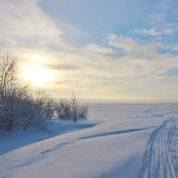 Морозным днем. :: Галина .
