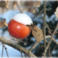 яблоки в феврале :: Юлия Карпович