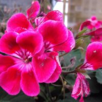 Любимые цветы :: Svetlana Lyaxovich