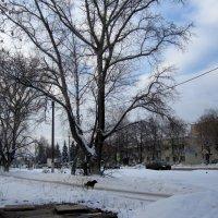 зимняя жизнь деревьев и собак... :: Галина Филоросс