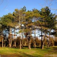 В Детском парке на берегу реки Анапки :: Нина Бутко