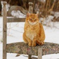 Ее рыжее величество :: Оксана Лада