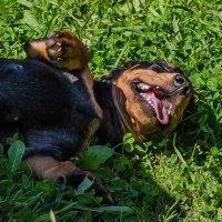 Лето это счастье! :: Cветлана Журкина