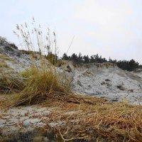 Балтийский берег в январе :: Маргарита Батырева