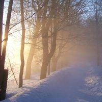 В морозной  дымке. :: Miko Baltiyskiy