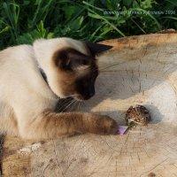 Кошка и лягушка. :: Ирина Крохмаль