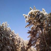 Мороз и солнце... :: Элен Шендо
