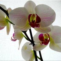 Цветы в феврале... :: Тамара (st.tamara)
