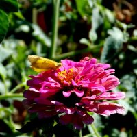 Собирая пыльцу :: Кристина Виноградова