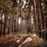 Дремлет лес сосновый, солнцем утомлённый... :: Ирина Falcone