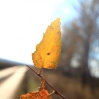 Листья кружатся... :: Дмитрий Денисов