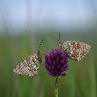 Бабочки :: Тамара