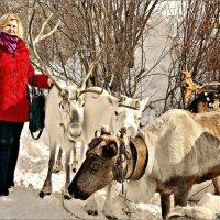 Олени и саами живут рядом с нами... :: Кай-8 (Ярослав) Забелин