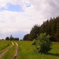 Дорога в деревню к бабушке :: Светлана Ларионова