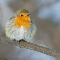 Зимовщица :: Анна Солисия Голубева