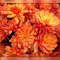Отцвели уж давно хризантемы в саду, но... :: Татьяна Евдокимова