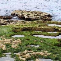 каменистый берег Средиземного моря :: vasya-starik Старик